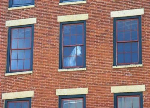 Window Horse