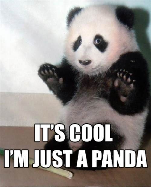 It's Cool, I'm Just A Panda
