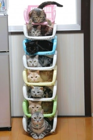 Cat Stacking