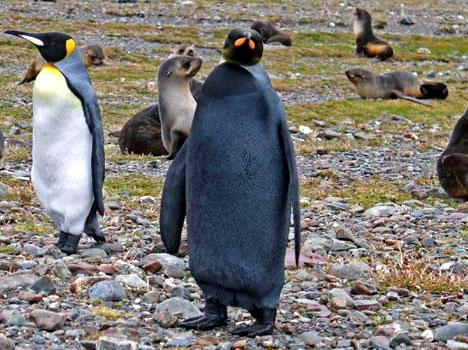 This Penguin...