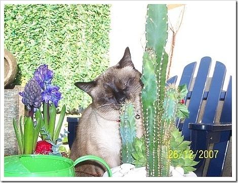 Cats + Cactus = Sexy