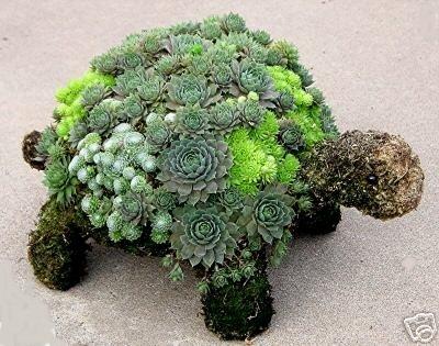 Cacti X Turtle = Sexy ++