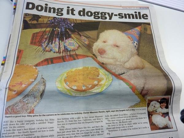 Birthday Dog's Backstory!