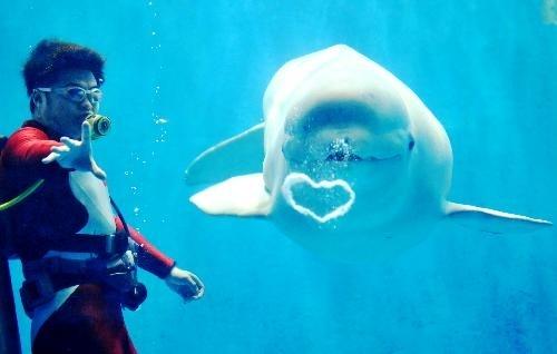 White Whale Cute.