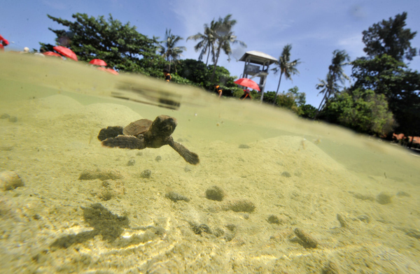 Hawksbill Turtle Celebrates Earth Day