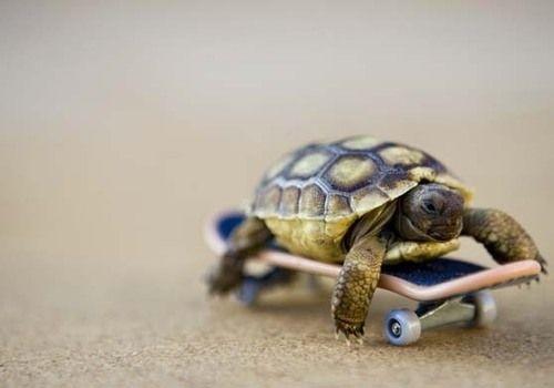 Sk8ter Tortoise