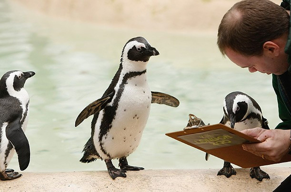 Penguin Clubbing