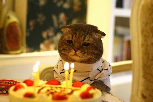Existential Birthday Cat