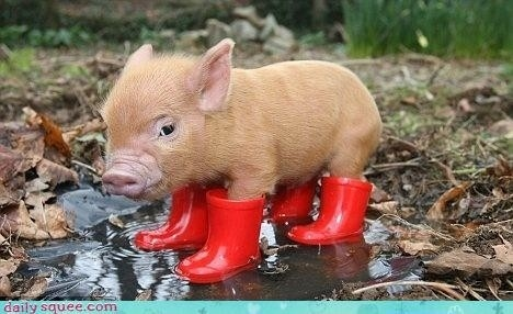 Precocious Piglet Hates The Rain
