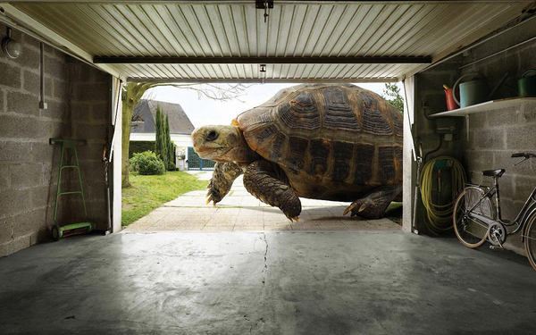 The Importance of Tortoise-Proofing the Home