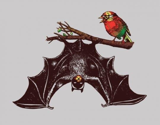 Bat Bat & Robin Robin