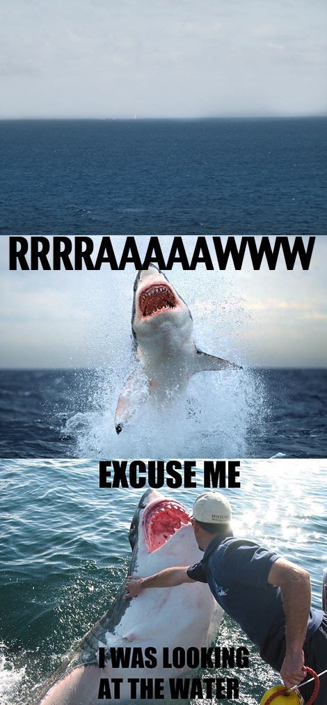 Excuse Me Shark