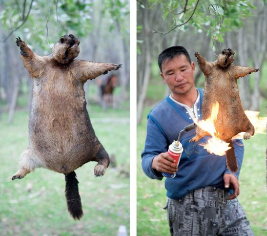 The Saddest Meal You'll Ever Have: Mongolian Marmot