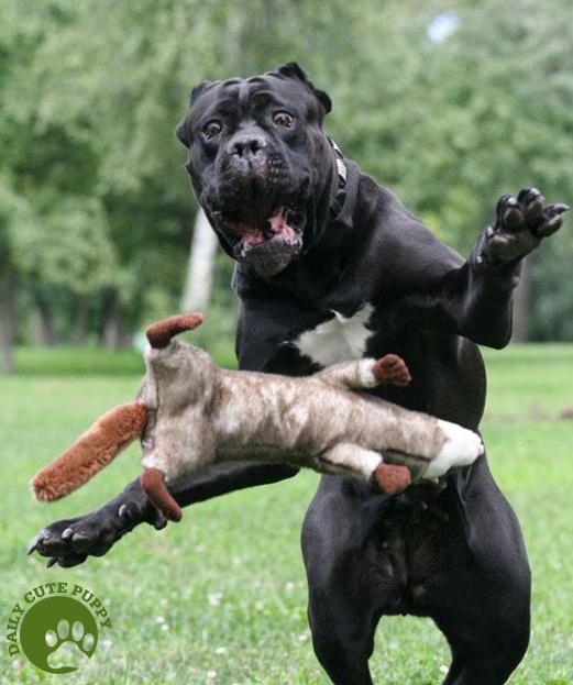 Dog Fights Stuffed Animal