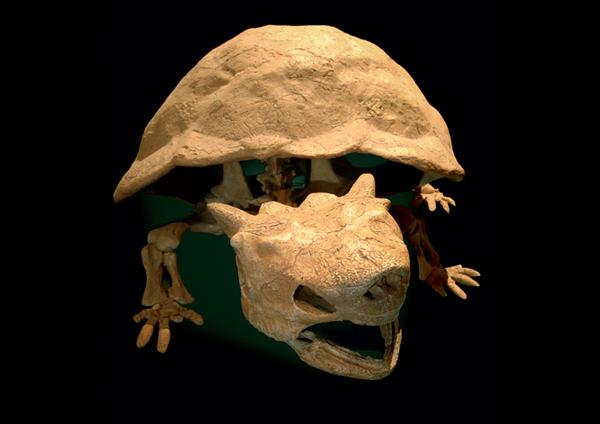 King Koopa-style Skeleton Found
