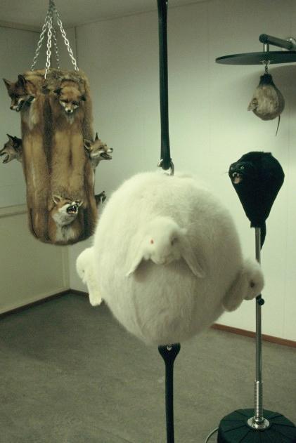 Animal Carcass Punching Bags