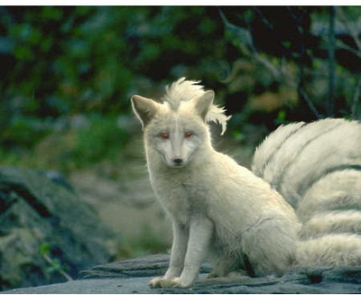 Ninetales in Real Life