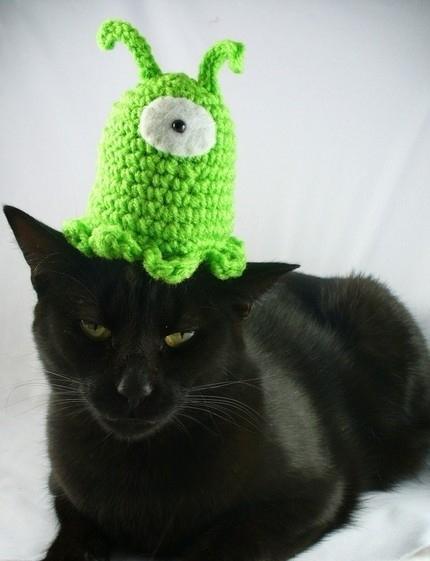 Cat Attacked by Brain Slug