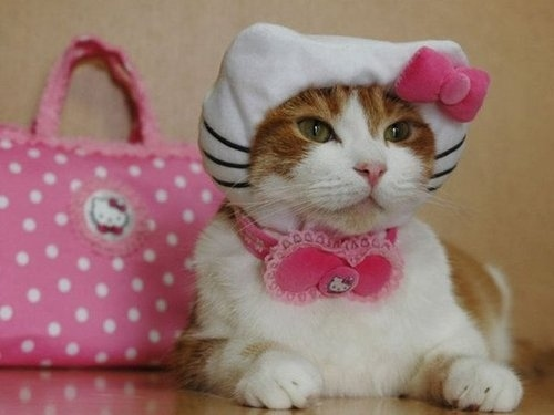 The Real-life Hello Kitty...