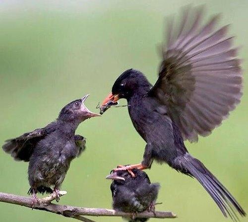Even Birds Pick a Favorite Child