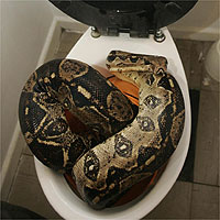 Toilet Snake Attacks!