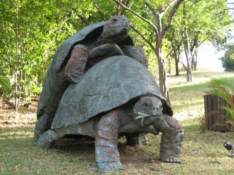 Statue of Fornicating Tortoises