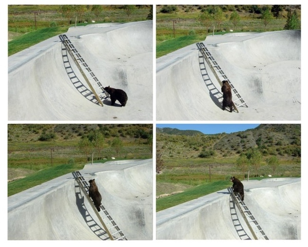 Bear Uses Ladder
