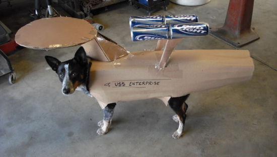She Canine Take Any More, Captain.