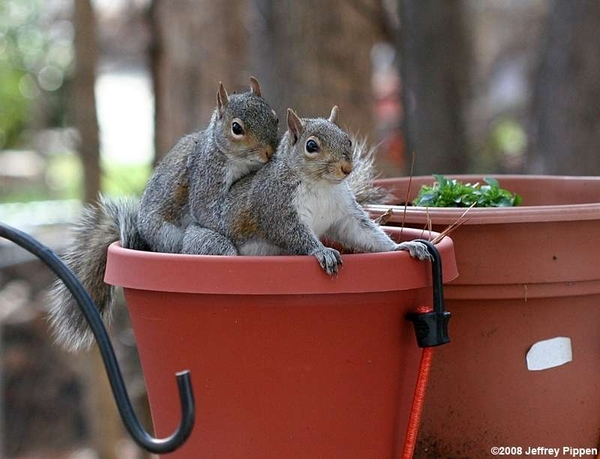 Excuse Me, Have You Seen My Nuts?
