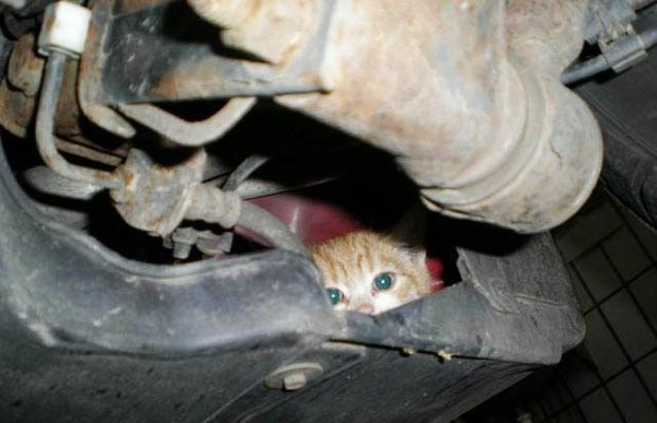 Forget Hybrid, Go Kitten