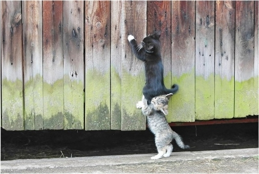 Kitten Teamwork!