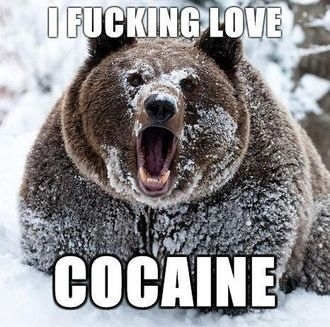 Grizzly Bear Loves Crack