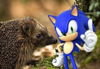 SEGA Steps In To Save The Hedgehogs