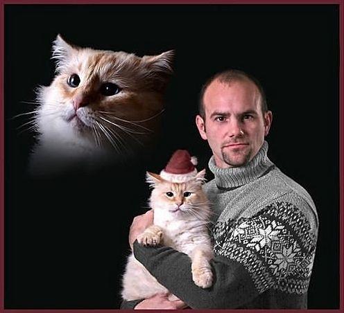 Meowrry Christmas Card