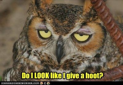 Apathetic Owl Doesn't Care