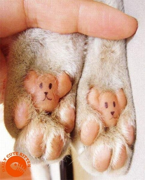 Cutest Paws Ever