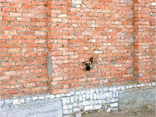 Wall Dog