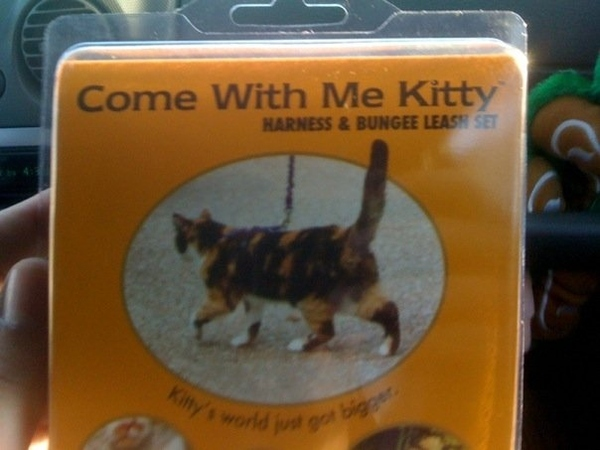 """""""Come With Me Kitty"""""""