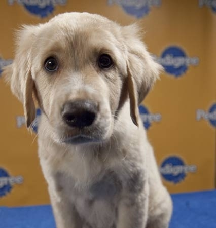 Meet Eenu The Enforcer - Part Of The Starting Lineup For Sunday's Puppy Bowl VI