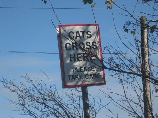 Cat Crossing!