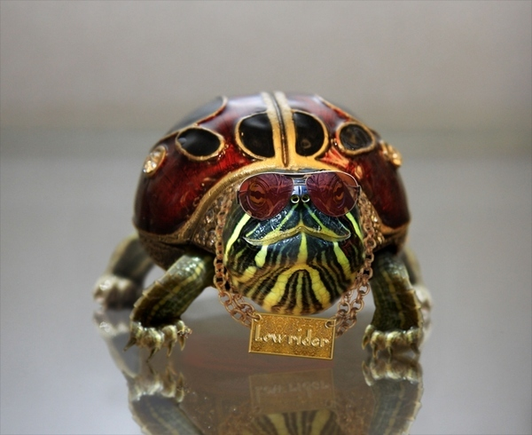 Bling Turtle