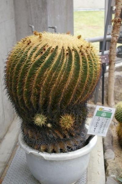 Alien Cactus