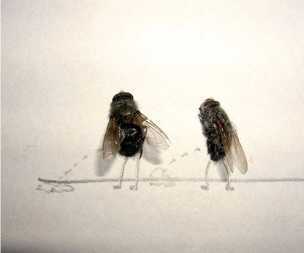 Bored at Work? Dead Fly Art Will Keep You Busy
