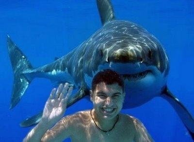 Shark Photo-bomb