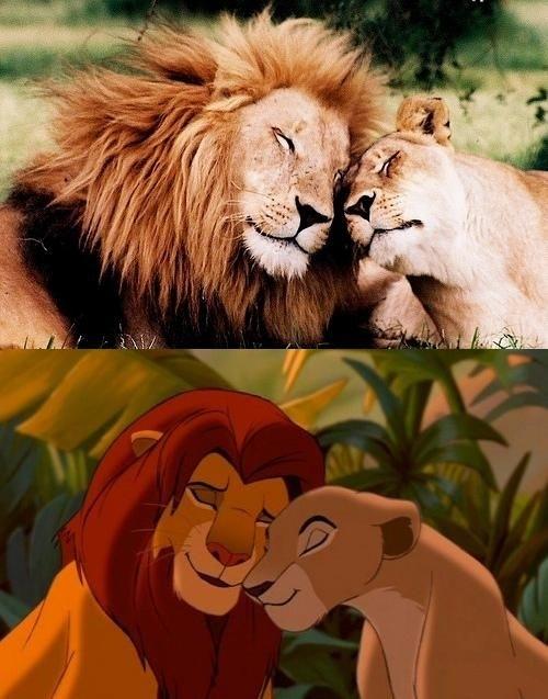 Simba and Nala In Real Life