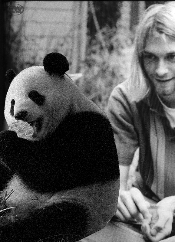 Kurt Cobain and a Panda Eating a Cupcake