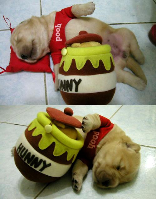 Winnie the Pooh Puppy