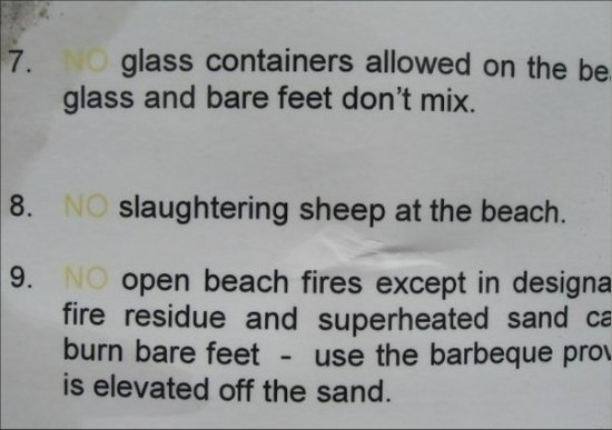 Finally, A Beach That's Safe For Sheep