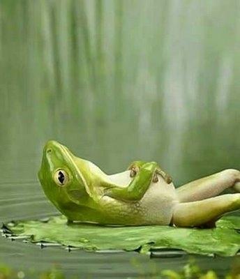 Satisfied Frog