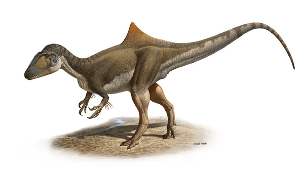 Hunchbacked Dinosaur Discoverd